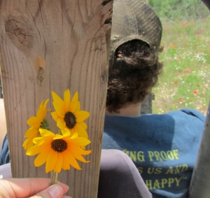 Sunflowers from Carrizo Springs - Love Poem - Koogimama Ponders